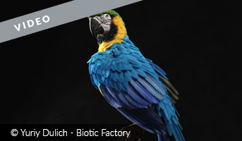 Blue and Gold Macaw by Yuriy Dulich